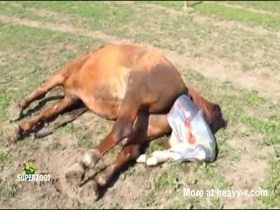 Horse Giving Birth