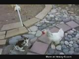 Rabbit Chicken Streetfight
