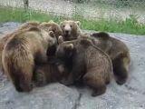 Bear Gangbang