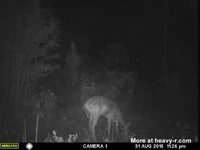Amazing UFO footage filmed over Hahira, Georgia