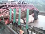 Accident with truck load of pigs