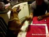 Arm Wrestling an aggressive dog 