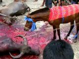 Horse sacrifice