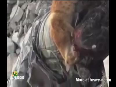 Cat Feasting On A Dead Man's Face