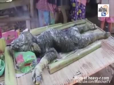 Strange Crocodile Buffalo Creature Discovered In Thailand