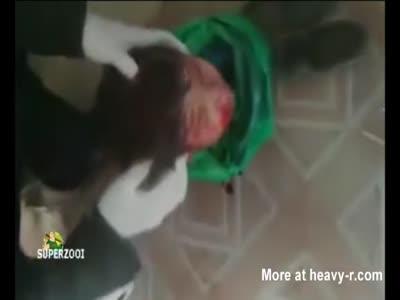 Child's Head Found In Plastic Bag