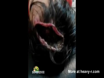 Head Wound Crawling With Insects