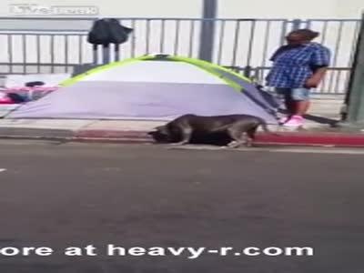Pitbull Off The Leash Kills Chihuahua